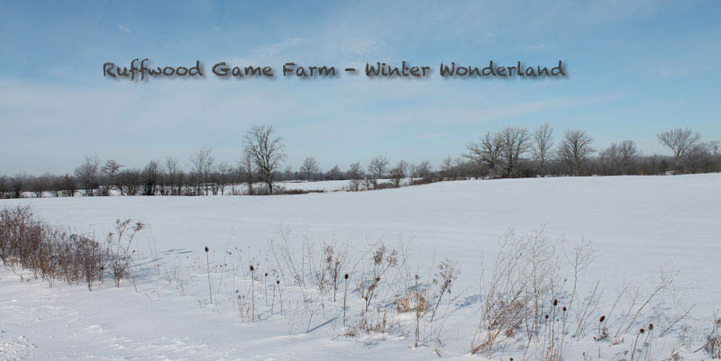 winter at Ruffwood Game Farm